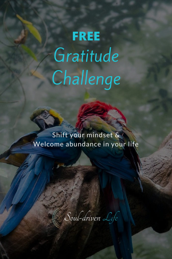 Gratitude Challenge - Day 4 | Soul-Driven Life